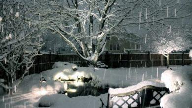 Photo of عکسهایی از زیباییهای فصل زمستان