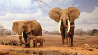 Photo of عکس هایی از طبیعت بسیار زیبا و بکر آفریقا با کیفیت HD!