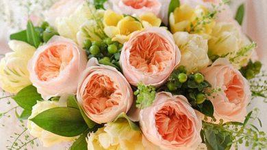 Photo of گرانترین گلهای جهان