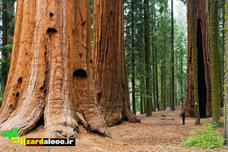 پارک ملی سکویا را بشناسید
