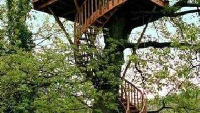 Photo of کلبه های جنگلی واقعی که بیشتر شبیه رویا هستند