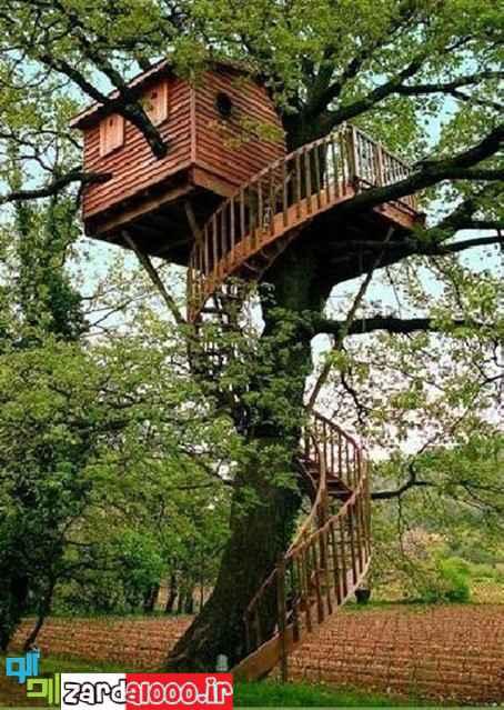 کلبه های جنگلی واقعی که بیشتر شبیه رویا هستند