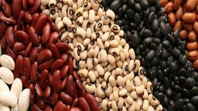 Photo of لوبیا غذایی با فسفر فراوان ،مفید برای مغز و اعصاب