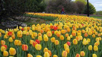 Photo of آشنایی با پارک لاله تهران یکی از بهترین بوستان های کشور+تصاویر