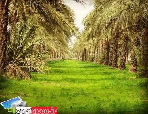طبیعت روستای شلهه ثوامر آبادان
