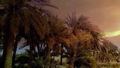 Photo of طبیعت زیبای روستای شلهه ثوامر آبادان+تصاویر