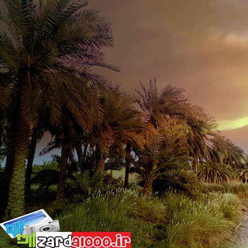 طبیعت زیبای روستای شلهه ثوامر آبادان+تصاویر
