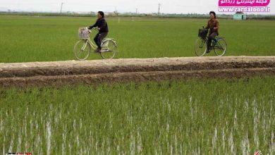 Photo of تصاویر : نگاهی به زندگی مردم کره شمالی