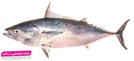 ماهی زرده و گباب