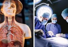 Photo of انسان بدون این 11 اندام بدن زنده میماند