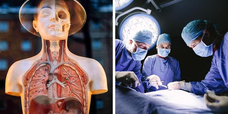 انسان بدون این 11 اندام بدن زنده میماند
