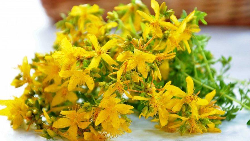 Photo of استفاده از گیاهان شفابخش برای درمان مشکلات پوستی